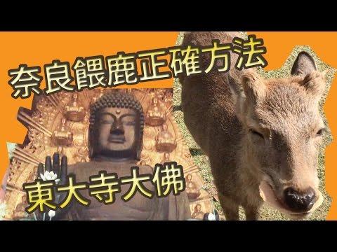 日本奈良餵鹿正確方法&東大寺大佛 (旅行藝術遊記)@屯門畫室