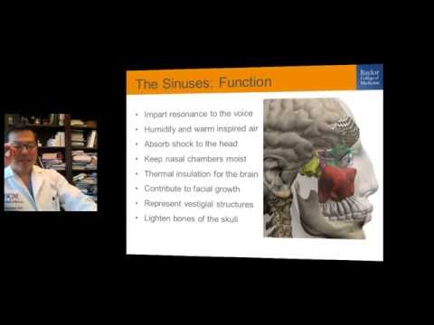 BCM Medical School lecture on sinusitis