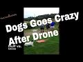 Dog Versus Drone