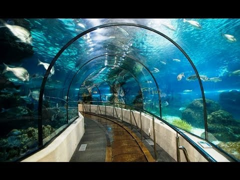 The World's Largest Oceanarium at Resorts World Sentosa in Singapore