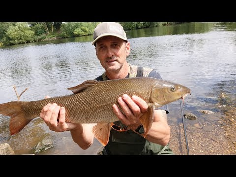 FANTASTIC CHUB AND BARBEL FISHING RIVER TRENT - VIDEO 57
