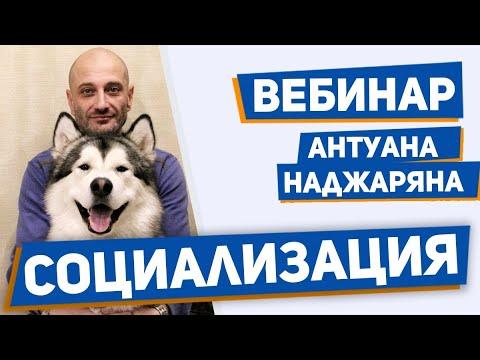 Социализация собаки. Обучение поведению в человеческом обществе