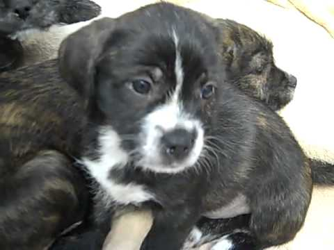 Adopt The Pups At The Connecticut Humane Society In Newington, CT
