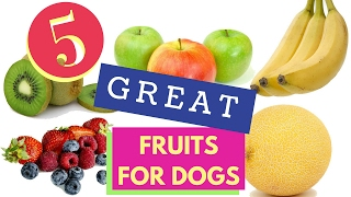 5 Great Fruits For Dogs