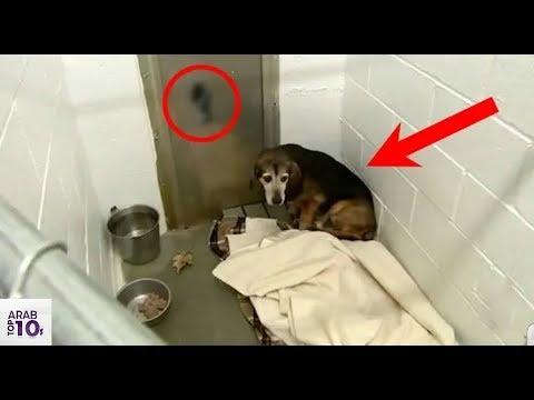 كلب لم يرى صاحبه منذ فترة . انظر ماذا وقع عندما رآه . مشهد مبكي  !!