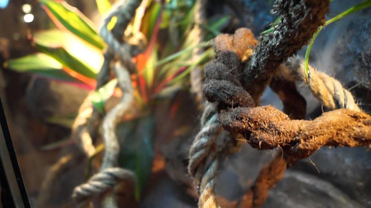 terrarium tropical d cor fait maison part 1 youtube. Black Bedroom Furniture Sets. Home Design Ideas