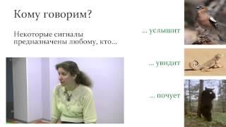 """""""Языки"""" животных и язык человека. Часть 2."""