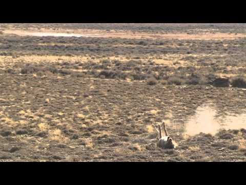 110 Coyote Kills in 220 Seconds!!