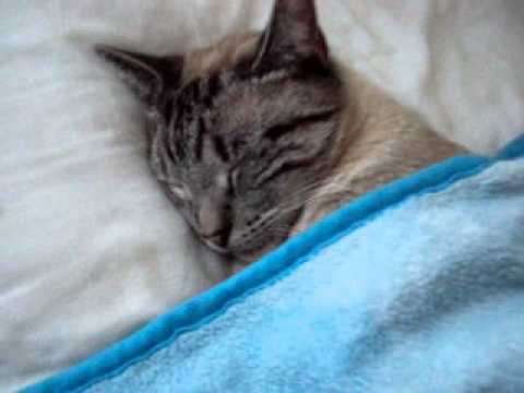 My Cat sleeping in the bed