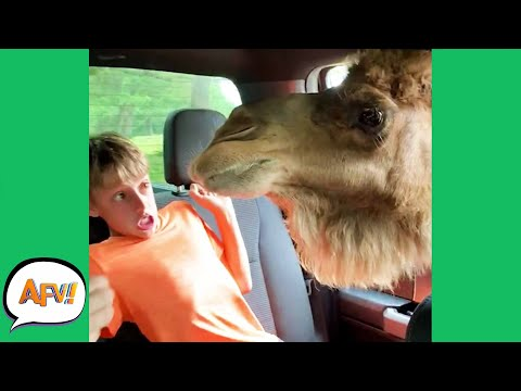 """When Animals """"ATTACK!"""" 😂  