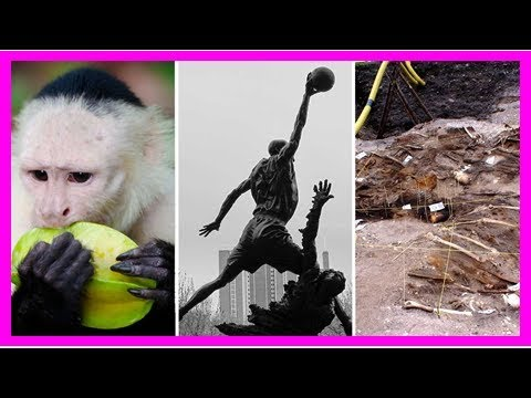 Top stories: rafting monkeys, brain-zapping cadavers, and the michael jordan of computer science