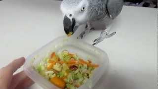 Zaz Congo African Grey Parrot Eating Chop