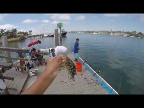 Newport Beach Dock Fishing