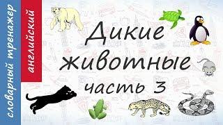 Животные на английском. Дикие Животные. Часть 3