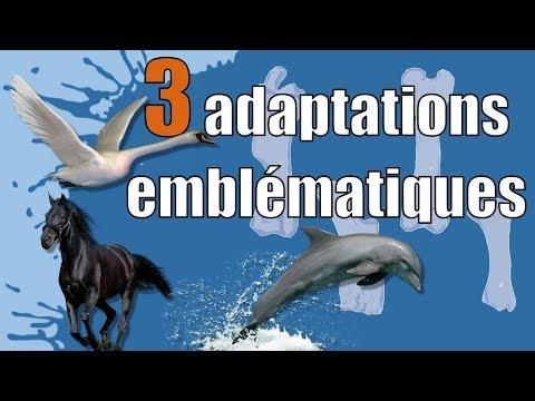 Paléo-J #4 : 3 Adaptations emblématiques (chez les Vertébrés)