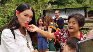 Best of Taiwan Trip (Taipei, Taoyuan, Miaoli, Nantou, Taichung, etc)