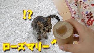 インスタはじめました  フォローお願いします♪ 毎朝、すずとコテツの朝ごはんの写真が見れます   https://www.instagram.com/nekosuzukote/ 毎晩6時半に...