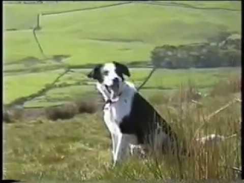 John Barry - Crazy Dog