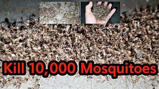 모기 퇴치!! 모기 수천마리 잡았습니다