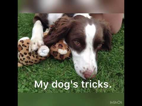 My dog's tricks.