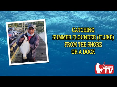 Catching Summer Flounder (fluke)from The Shore Or A Dock