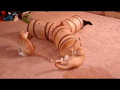Kittens New Tunnel!  (Prosper Pet Cat Tunnel From Amazon)