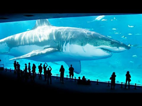 TOP 10 BIGGEST SHARKS IN THE WORLD