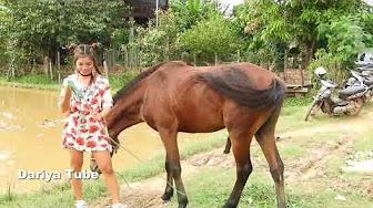 Dick horse I had