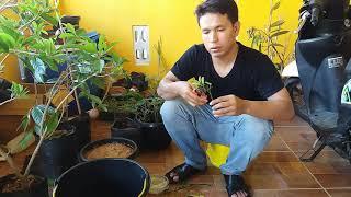 Video INSYA ALLAH SUKSES Cara Stek Tanaman Apapun Menggunakan Nature Stek download MP3, 3GP, MP4, WEBM, AVI, FLV Juli 2018