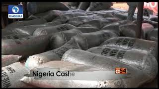 Focus On Cahew Production In Nigeria   Africa 54  