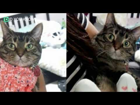 Cat Helps Her Parents Prepare For New Baby Sibling