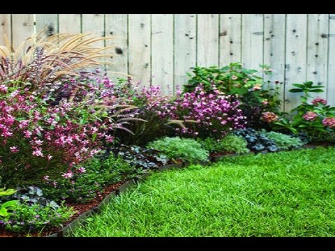 Garden Border Ideas shade perennial flower bed aruncus aethusifolius at either side of the aucuba variegata the yard landscapinglandscaping ideasbackyard ideasborder 10 Amazing Garden Border Ideas