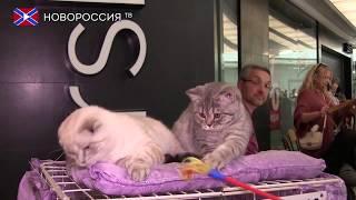 В Донецке состоялась выставка кошек