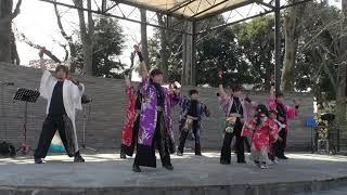 2020.4.4桜まつりIN鑁阿寺 千紫万紅2回目演舞「ハナヤマタ」