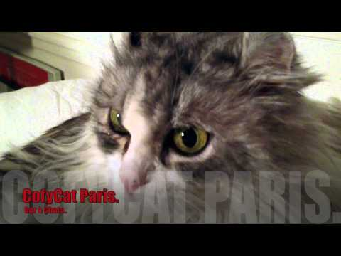 CofyCat Paris. Le Chat, The Cat..