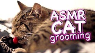 ASMR Cat - Grooming #23