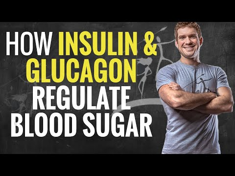how-insulin-and-glucagon-regulate-your-blood-sugar