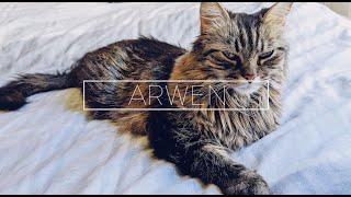 Arwen, A Photo-Video Film