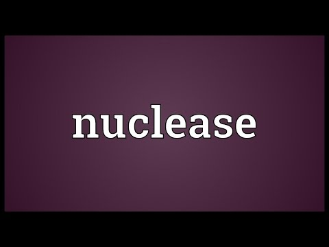 Nuclease Meaning