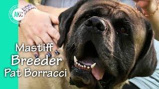 I am a Breeder - Pat Borracci - Mastiffs