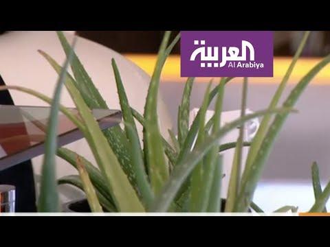 صباح العربية | فوائد نبتة الألوفيرا  - نشر قبل 3 ساعة
