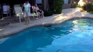 "Scottsdale Dog Training ""k9katelynn"" Teaches Coco(yorkshire Terrier) How To Swim! K9katelynn.com"