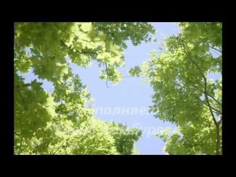Текст песни ДДТ - Что такое осень