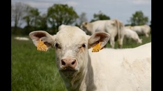 SOS PROTEIN : Elevage bovin viande