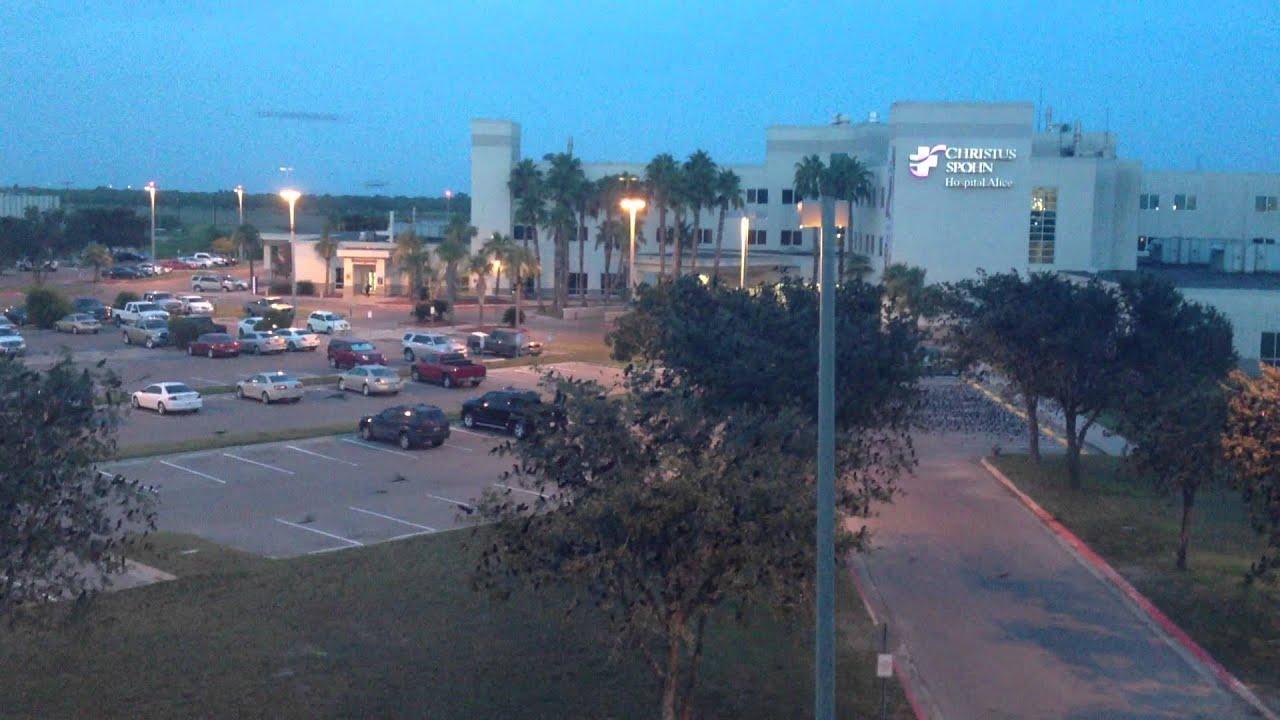 Birds In Alice Texas Near The Hospital Hotel You