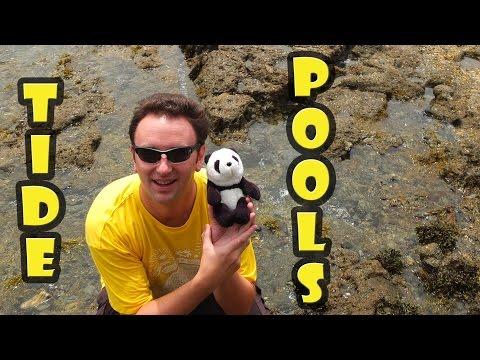 Tide Pools Laguna Beach California