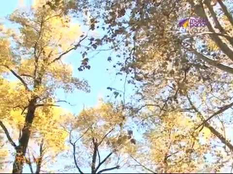 На восстановление парка Южные культуры уйдет 120 миллионов рублей