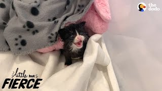 Litter Of Kittens Found Crying In Trash Bag | The Dodo Little But Fierce