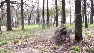 Repeat youtube video Best of Caucasian Ovcharka