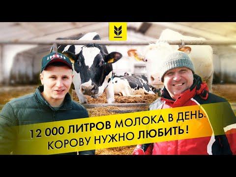Молочная ферма в Украине. Корова деликатное животное, ее нужно любить и беречь с рождения.